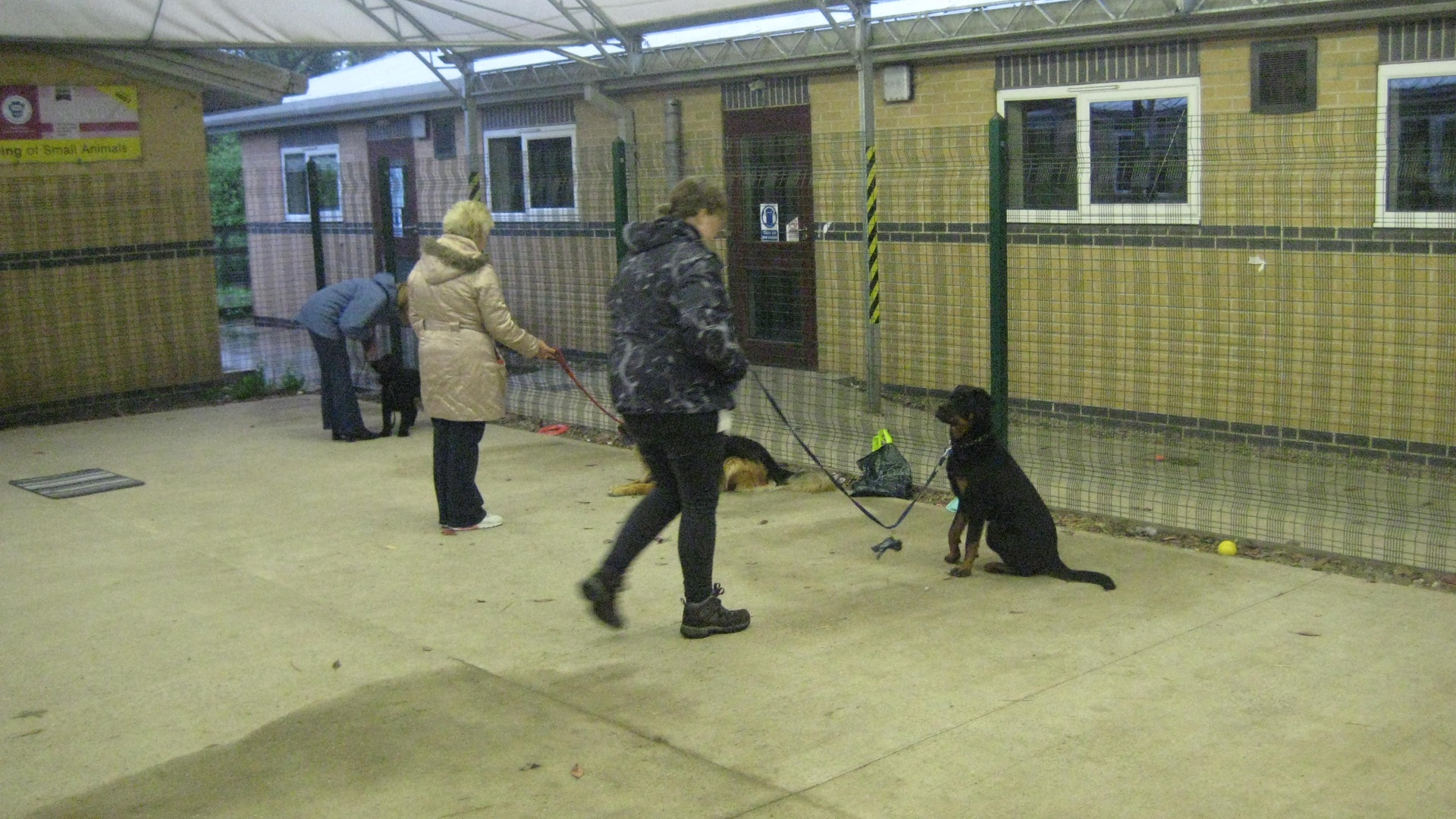 Leicesters Dog Training