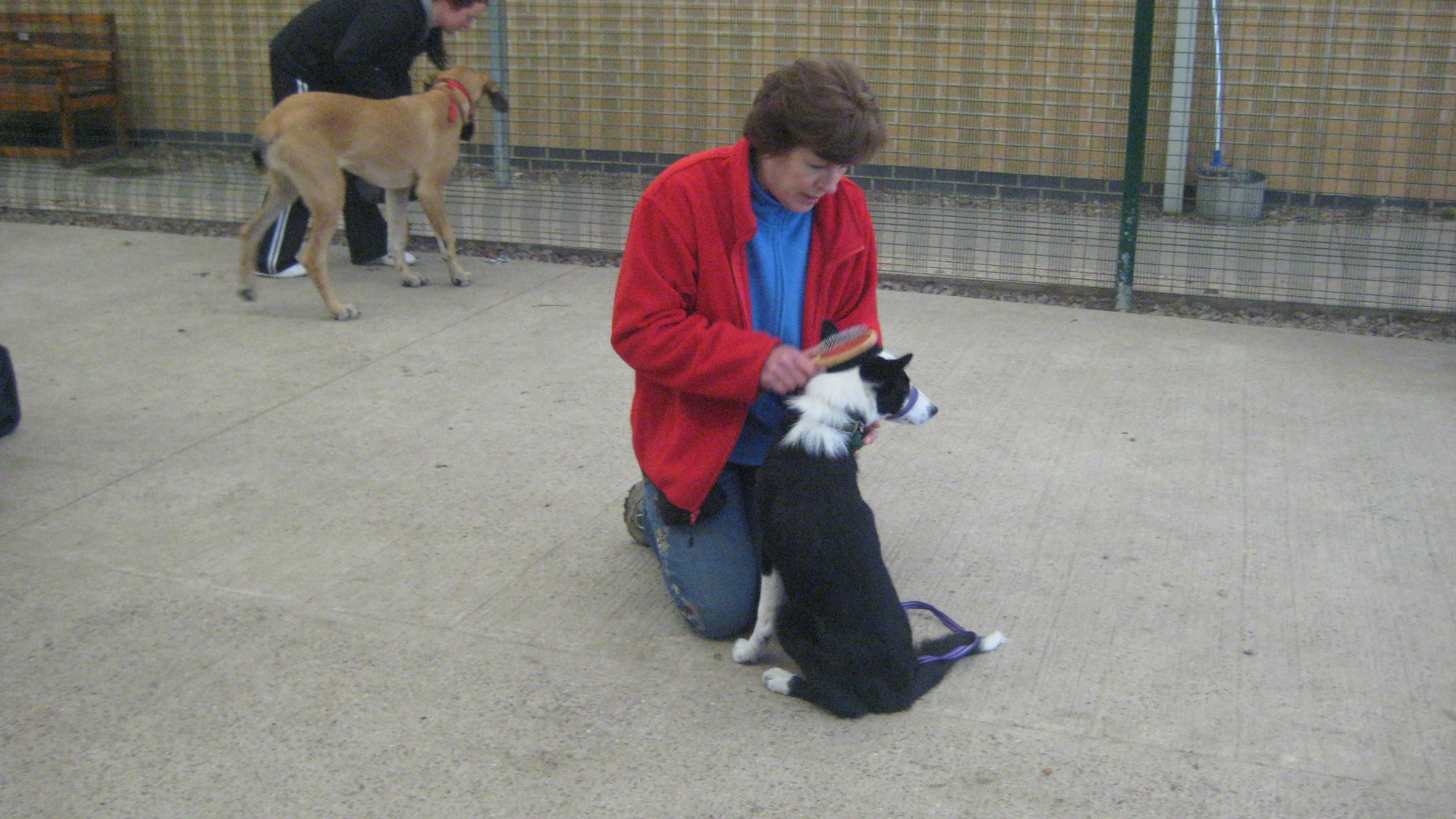 Puppy Training Leicester