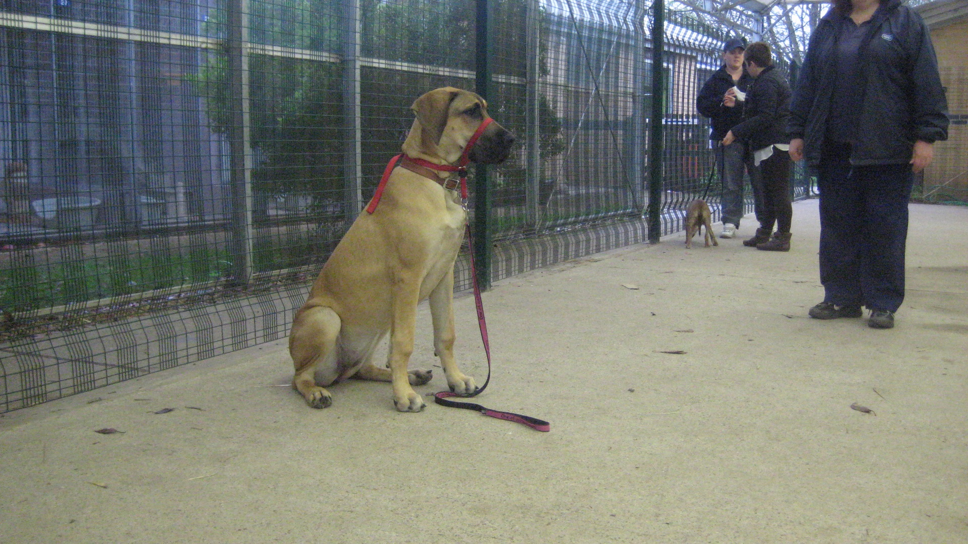 Dog Obediance Training Classes