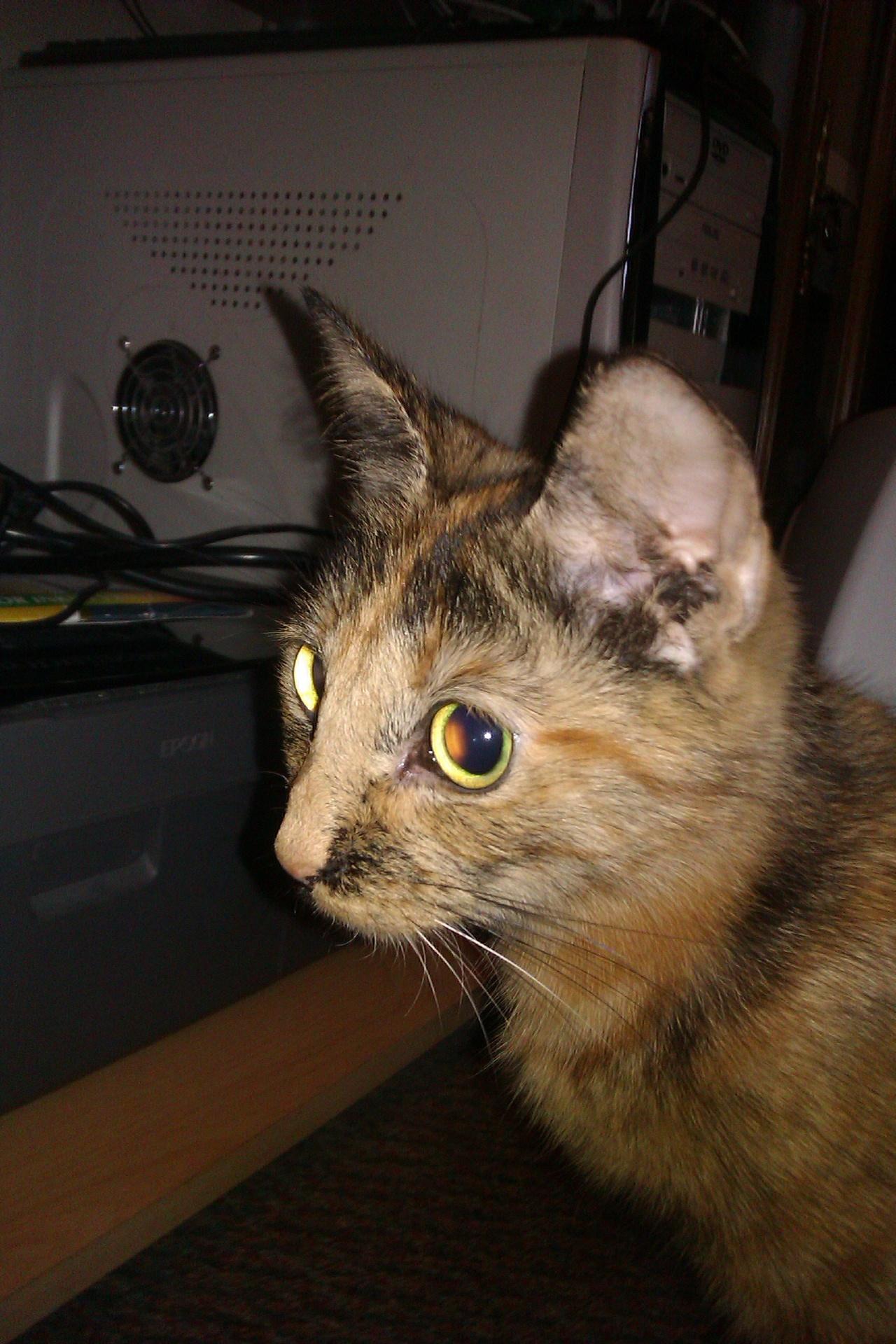 Cat Carer Leicester Service
