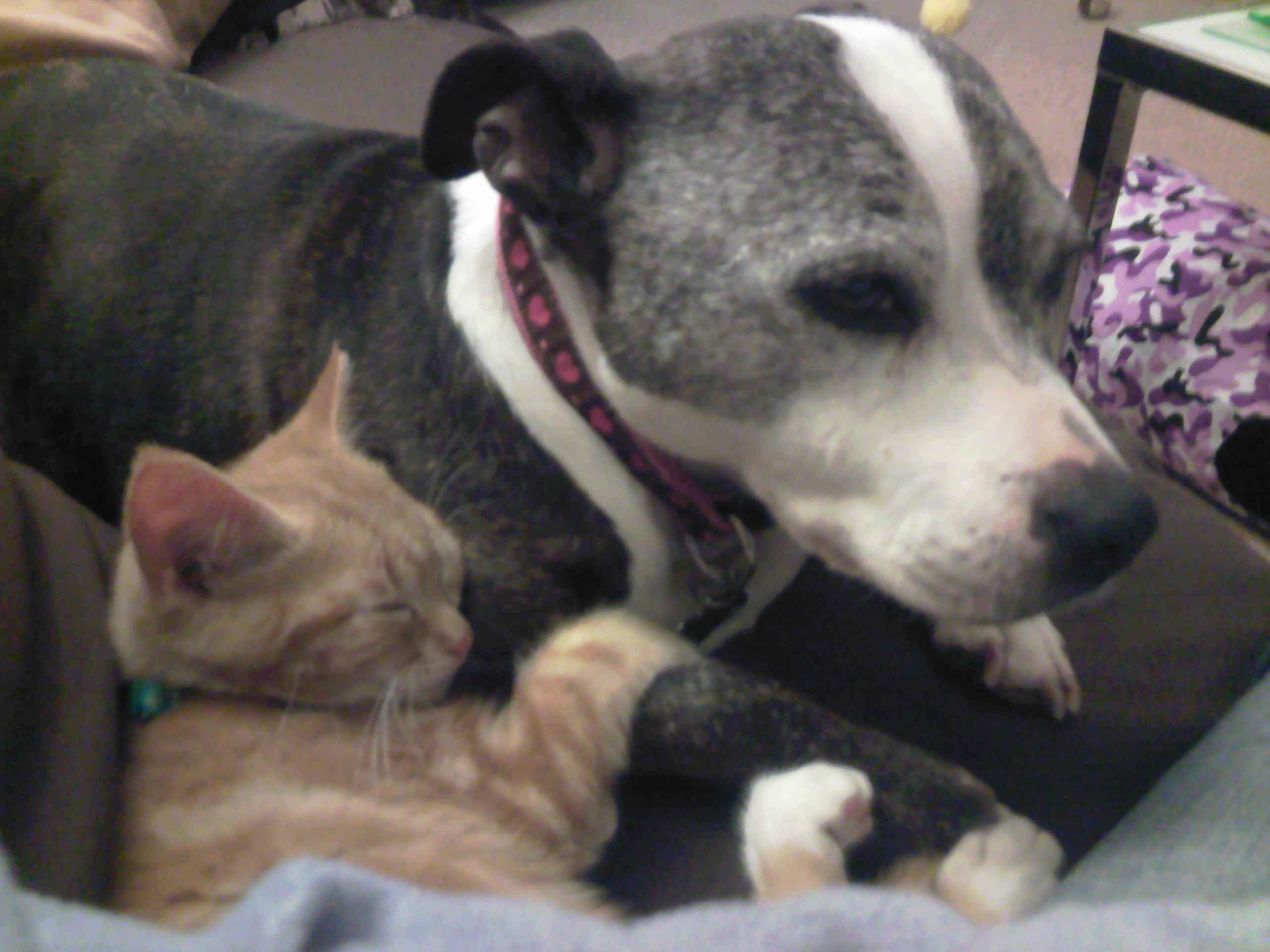 Dog Care Cat Care Leicester