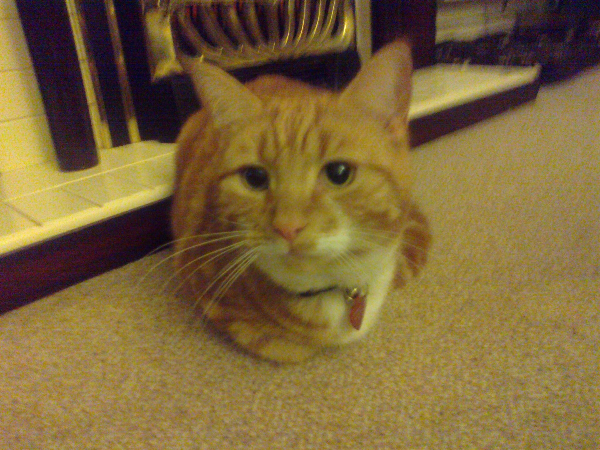 Cat Care Pet Sitting Leicester Area